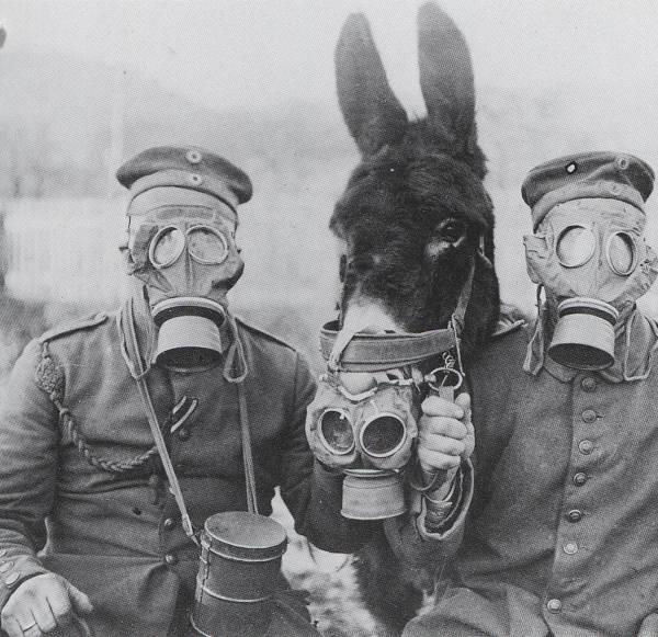 masque-a-gaz-pour-ane.jpg